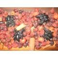 Primitive Halloween Spider Fixins - Pumpkin Pie Scented